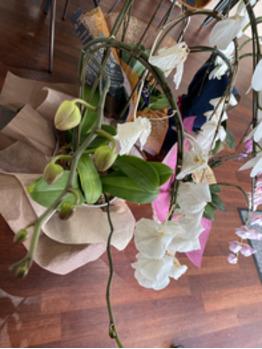 胡蝶蘭に次の新しいお花
